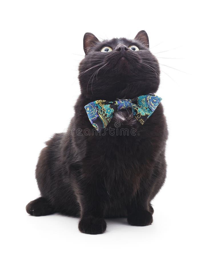 Черный котенок в бабочке стоковые фотографии rf
