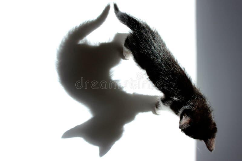 Черный котенок и его тень над белой предпосылкой стоковое фото
