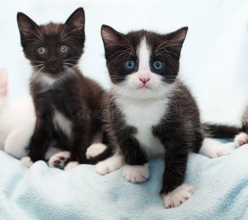 Download Черный котенок 2 на сини стоковое изображение. изображение насчитывающей мягко - 40581179