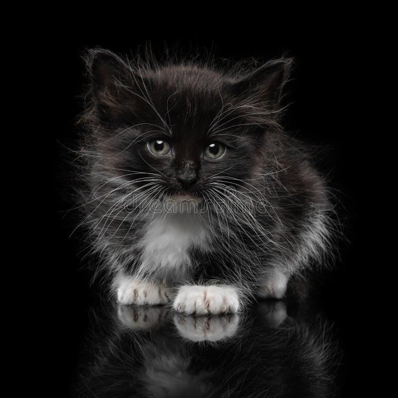 Черный котенок на черной предпосылке стоковая фотография rf