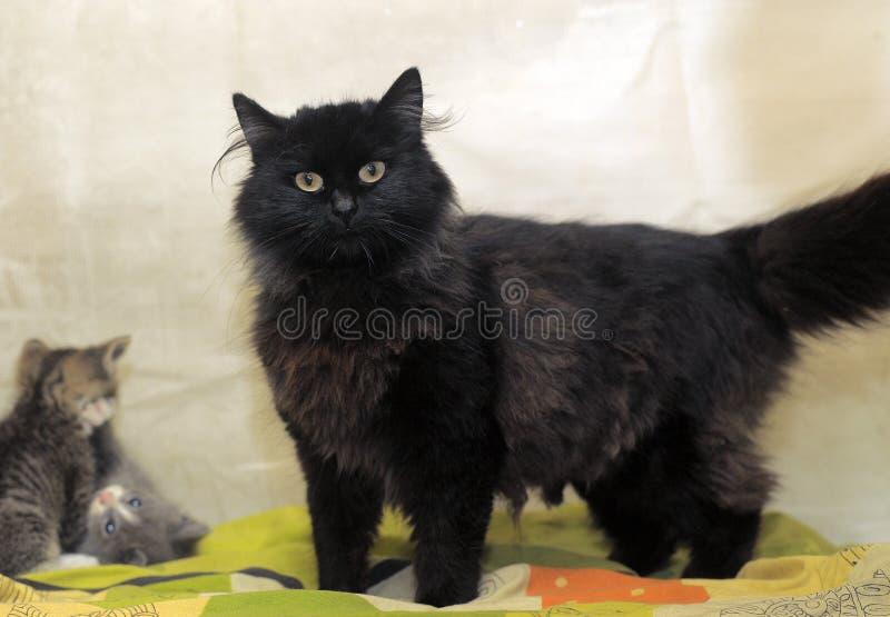 Download Черный кот и котята стоковое фото. изображение насчитывающей котята - 40588868