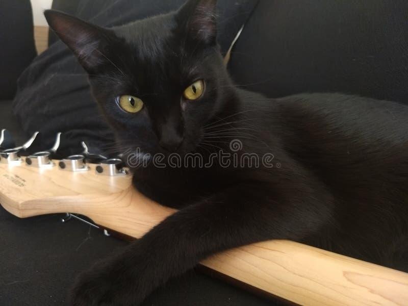 Черный кот на басе стоковая фотография rf