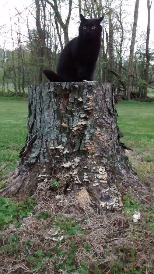 Черный кот на пне стоковая фотография