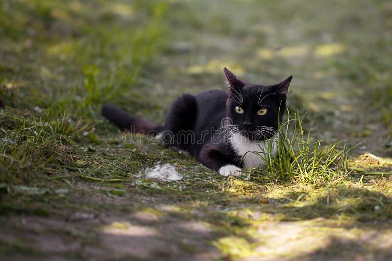 Черный кот охотится в саде стоковые фотографии rf