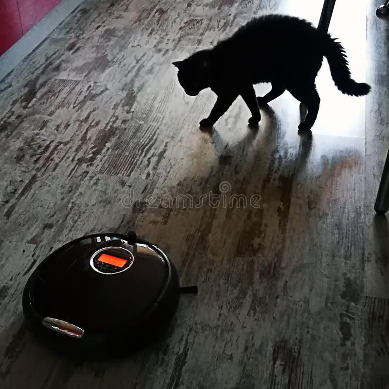 черный кот сердитый на пылесосе робота на поле кухни стоковое фото