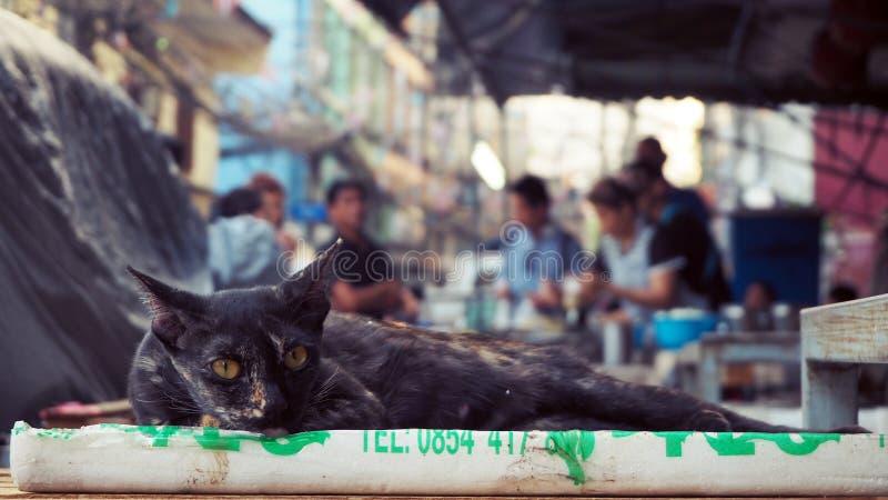 Черный кот спать на рынке С фоном покупательной способности ` s людей в рынке стоковая фотография