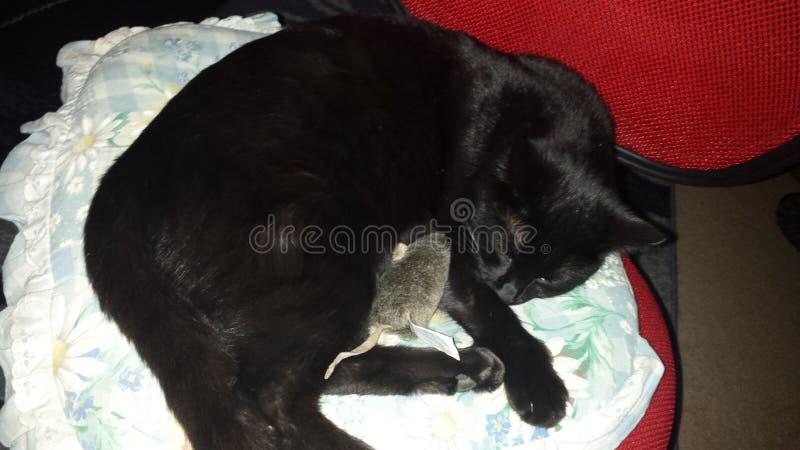 Черный кот спать на стуле стоковое фото rf