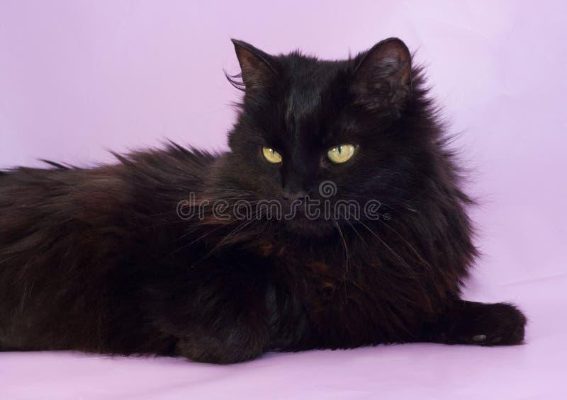 Download Черный кот с желтым цветом наблюдает лежать на пурпуре Стоковое Изображение - изображение насчитывающей любимчики, уши: 40581003