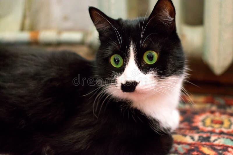 Черный кот с зелеными глазами смотрит прочь крупный план стоковая фотография