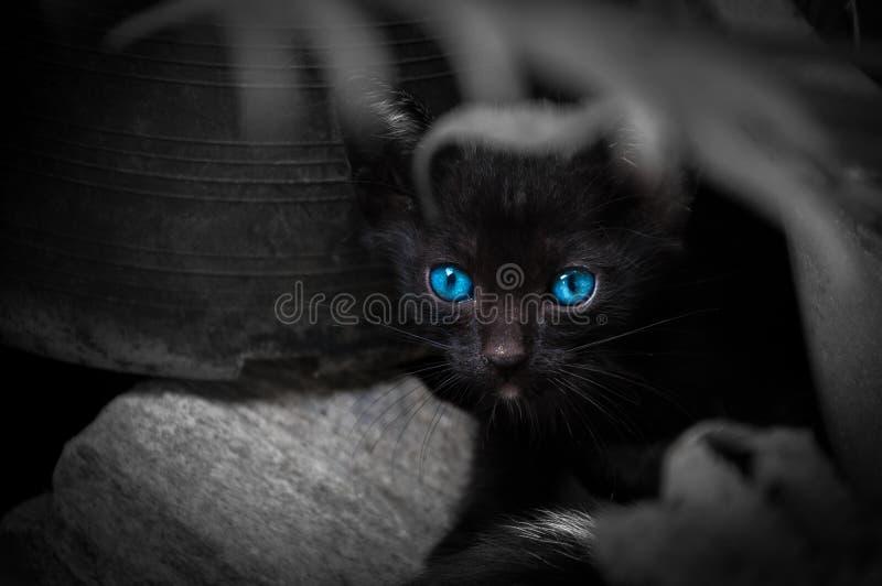 Черный кот с красивыми голубыми глазами стоковые изображения