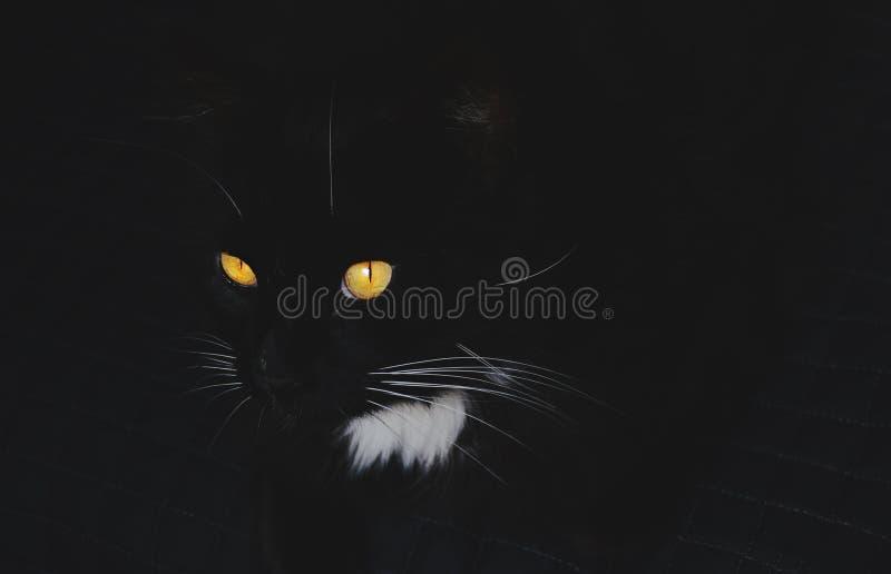 Черный кот с поразительными оранжевыми глазами стоковые изображения