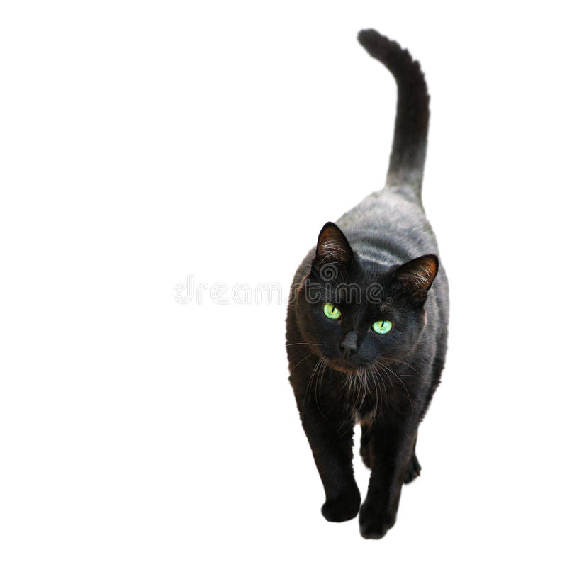Черный кот стоковое фото rf