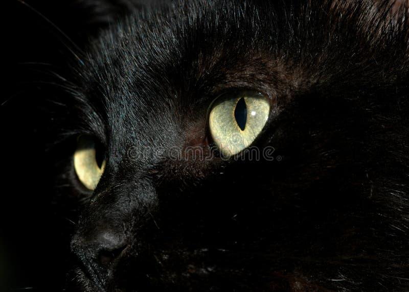 Открытка с котом черным