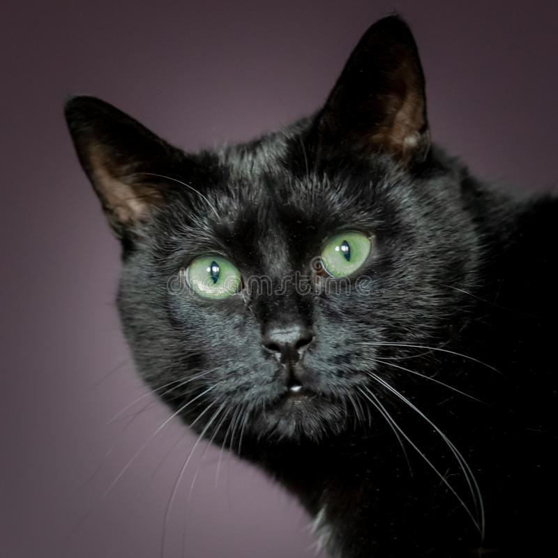 Черный кот Friday 13 стоковое фото