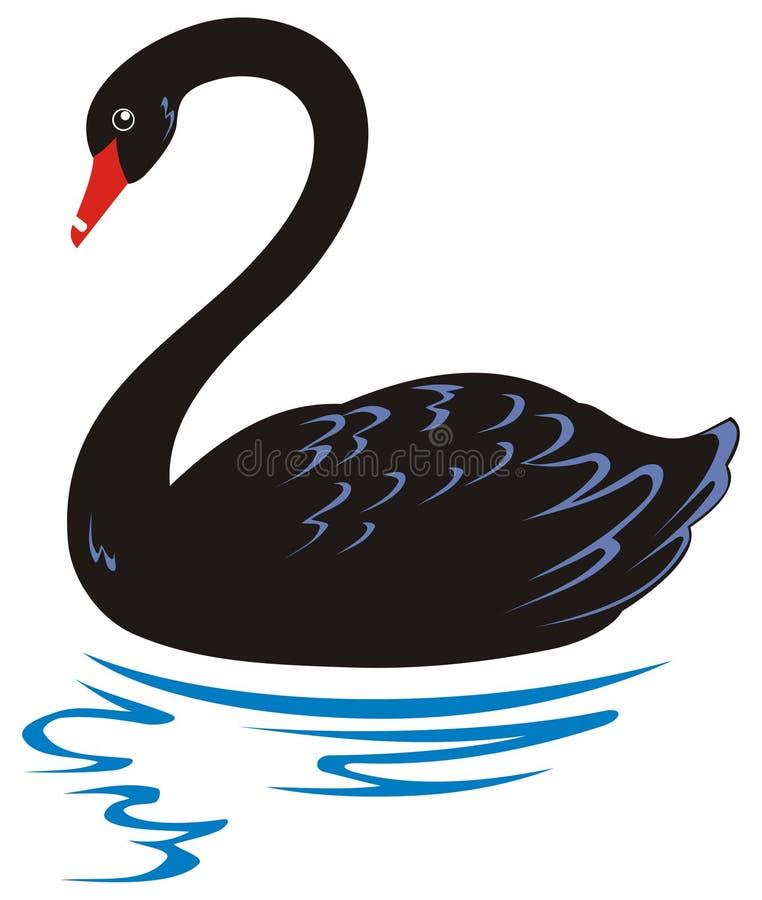черный лебедь иллюстрация штока