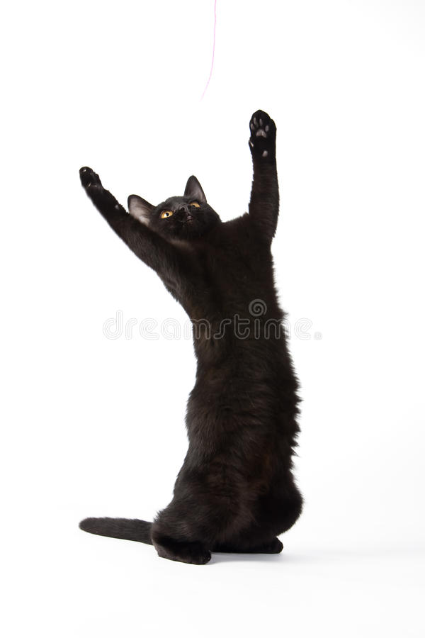 черный милый котенок стоковые фото