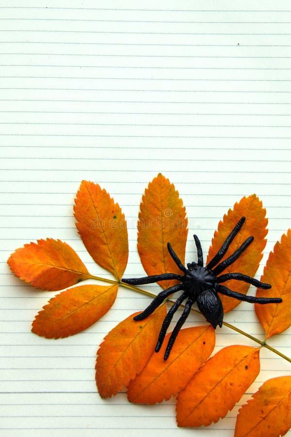 Черный резиновый паук сидит на оранжевых лист рябины Падение осени и концепция хеллоуина стоковая фотография