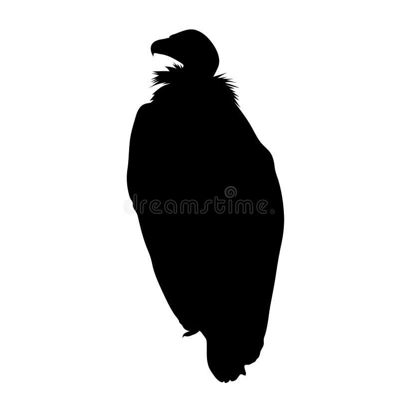 Черный силуэт сидя хищника на белой предпосылке vecto иллюстрация вектора