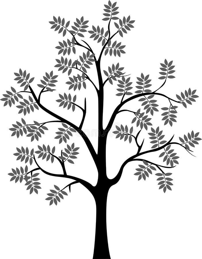 раскраска рябина дерево стойки создаст определенную