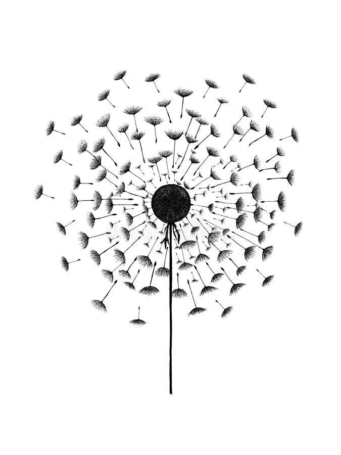 Черный цветок одуванчика стоковые фотографии rf