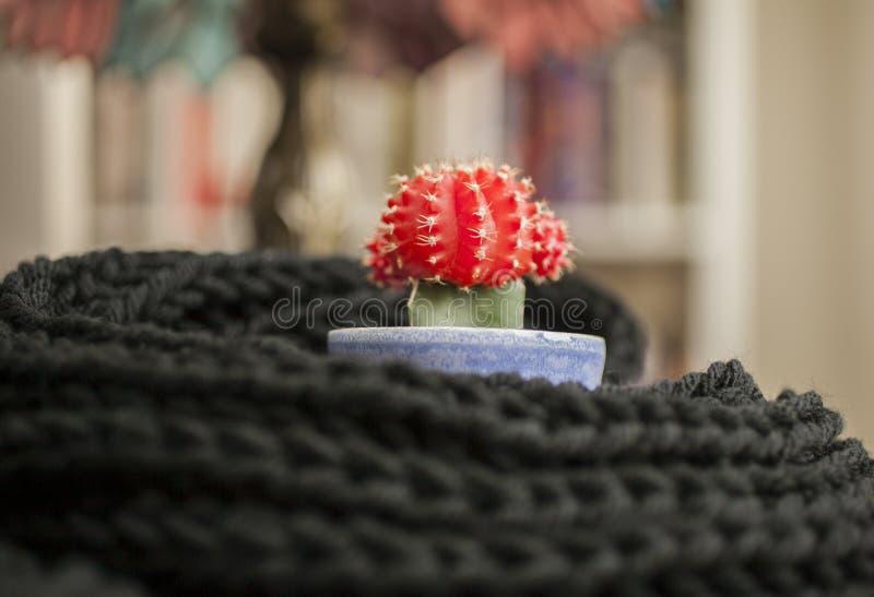 Черный шарф и красный кактус с красочной предпосылкой стоковые изображения