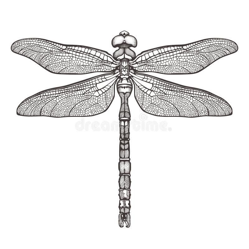 Черный dragonfly Aeschna Viridls, изолированное на белой предпосылке Эскиз татуировки Dragonfly Книжка-раскраски Нарисованный вру иллюстрация штока