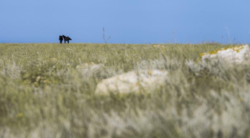 2 черных лошади на заводе стоковое фото