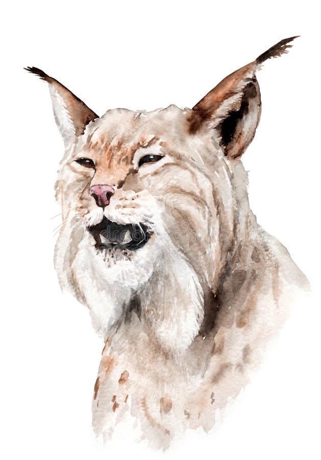 Чертеж акварели животного: рысь, род рыся иллюстрация вектора