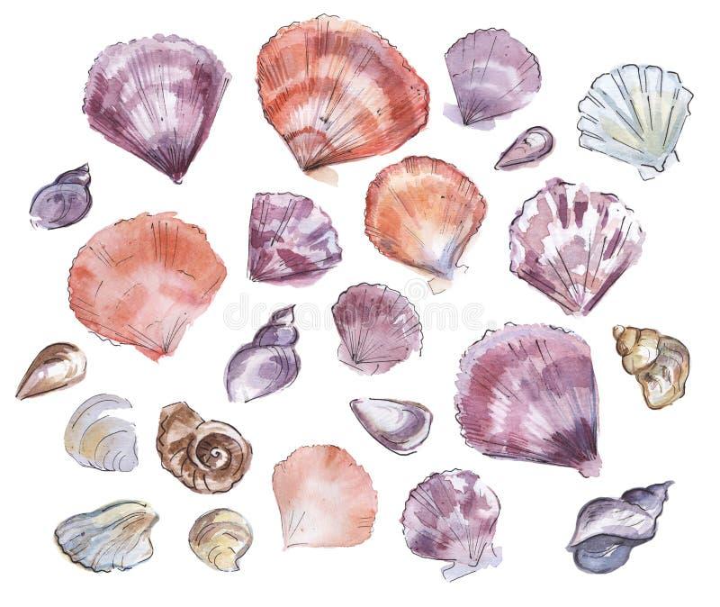 Чертеж акварели раковин моря иллюстрация вектора