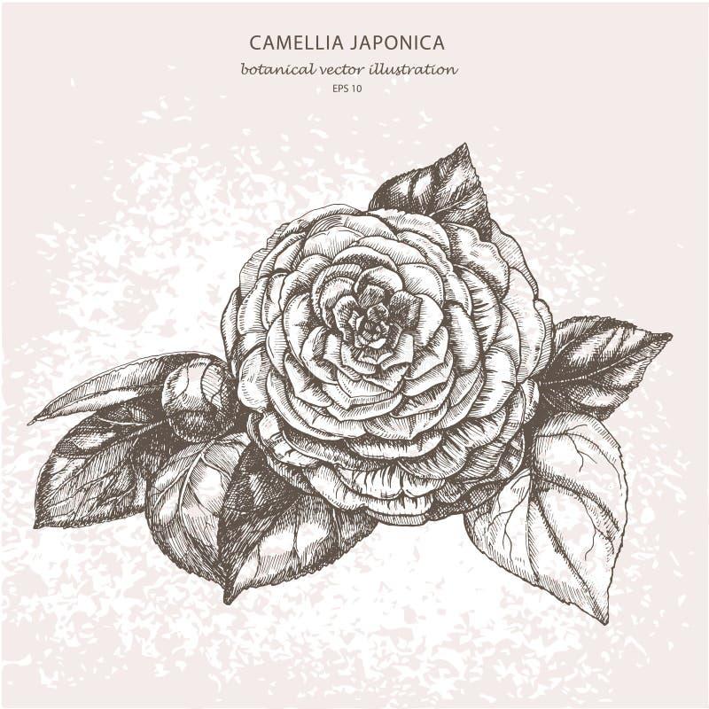 Чертеж акварели от руки Gardenia цветка стоковые фотографии rf
