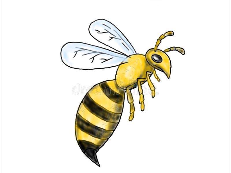 Чертеж летания пчелы бесплатная иллюстрация