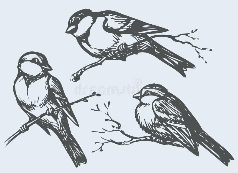 Чертеж от руки вектора Синицы, воробьи и bullfinches на branc иллюстрация вектора