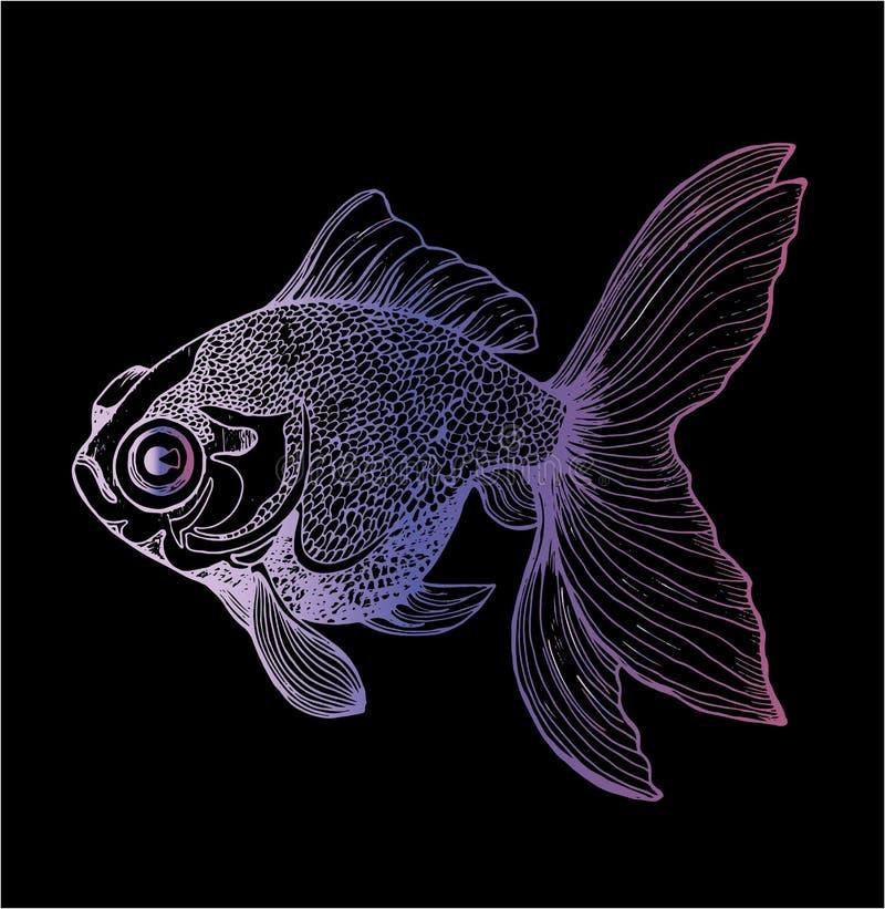 Чертеж цвета llustration рыб золота Чертеж морского животного иллюстрация вектора