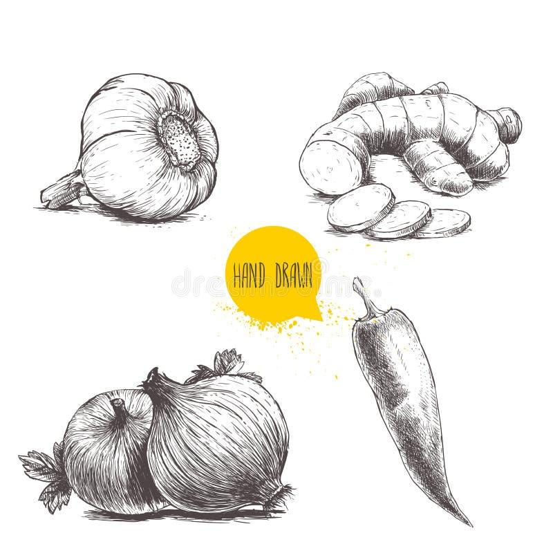 Чеснок, корень имбиря с кусками, луки и накаленный докрасна перец chili иллюстрация вектора