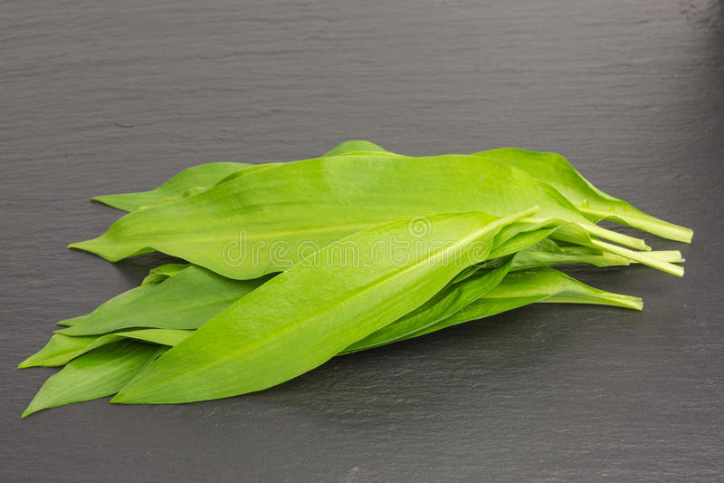 чеснок одичалый стоковое фото rf
