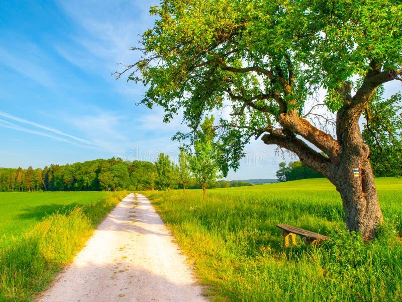 чехословакский ландшафт сельский Малая деревянная скамья под зеленым густолиственным деревом около проселочной дороги Идилличное  стоковое изображение