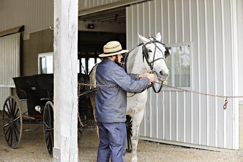 Человек Амишей подготавливая его лошадь для езды стоковые изображения rf