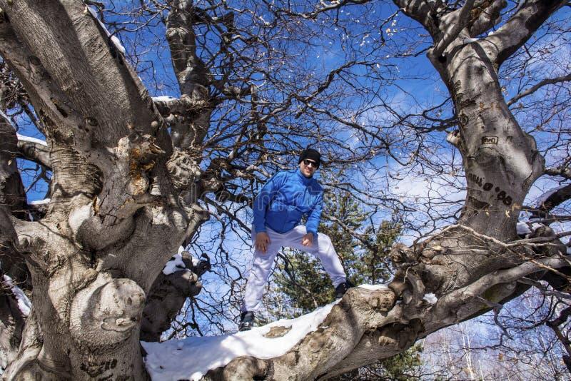 Человек взбираясь досточтимое дерево стоковые фото
