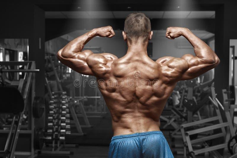 Человек вид сзади мышечный представляя в спортзале, показывающ назад и бицепсе Сильный мужской нагой торс, разрабатывая стоковое фото