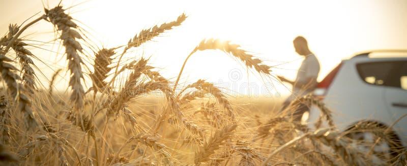 Человек вставил с его автомобилем в пшеничном поле стоковые фото