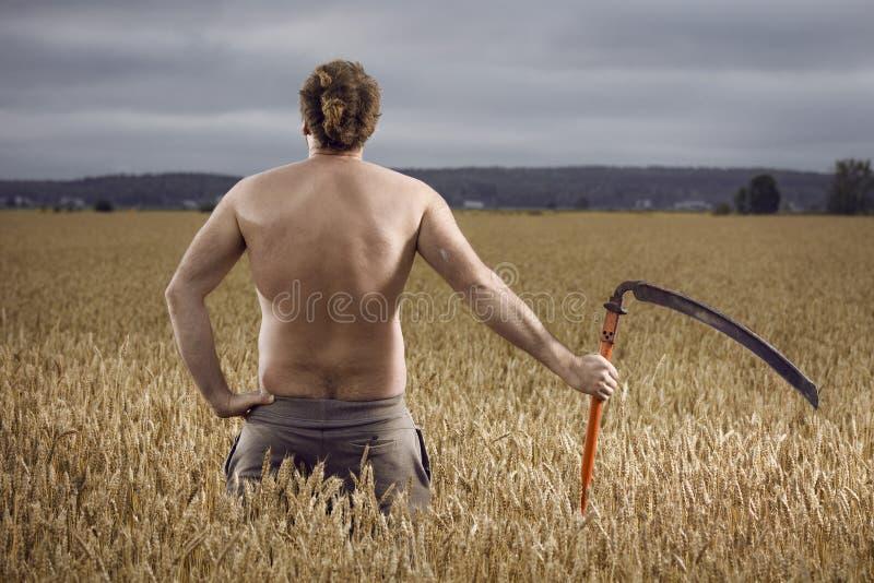 Человек в поле с косой стоковая фотография