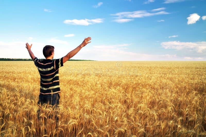 Человек в луге золотой пшеницы. стоковые фотографии rf