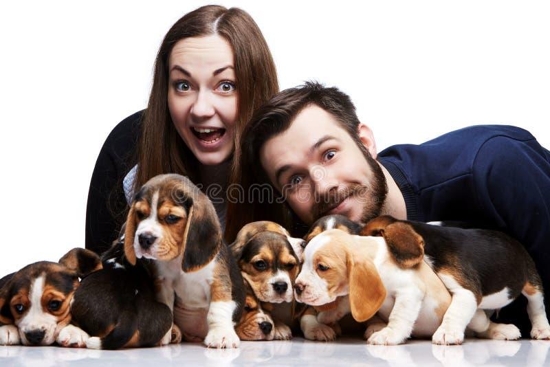 Человек, женщина и большая группа в составе щенята бигля стоковая фотография