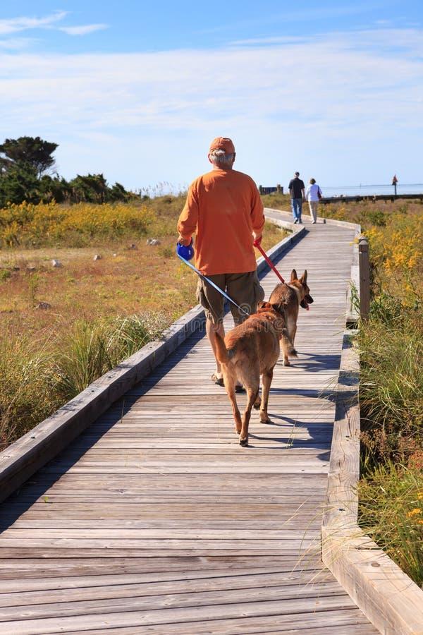 Человек идет воссоздание Северная Каролина NC собак внешнее стоковое изображение