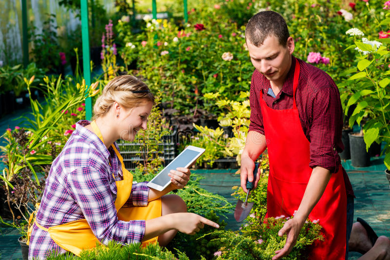 Человек и женщина работая на плантации стоковые фотографии rf