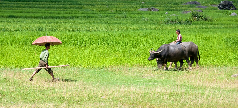 Человек и молодой мальчик на рисе field в Sapa, Вьетнаме стоковые фото