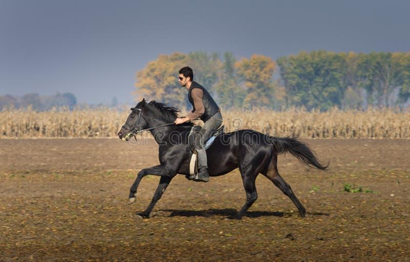 Человек на лошади стоковые фотографии rf