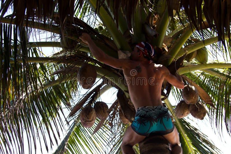 Человек на пальме стоковые фото