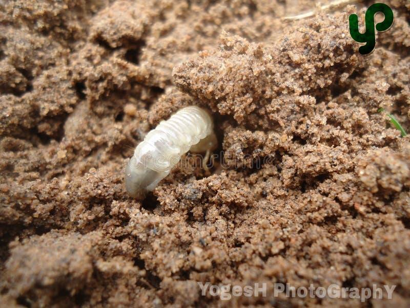 Человек почвы стоковое фото