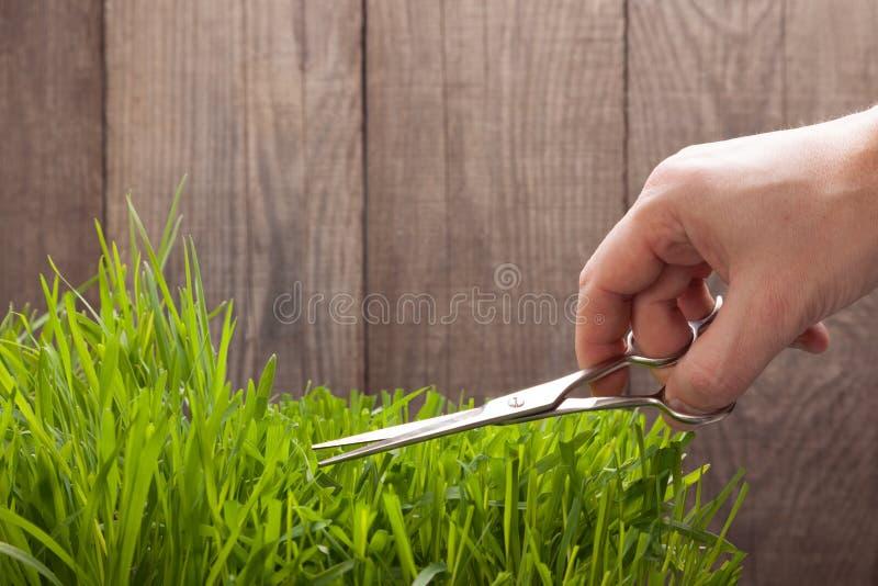 Человек режет траву для лужайки с ножницами, свежей лужайки отрезка стоковые изображения rf